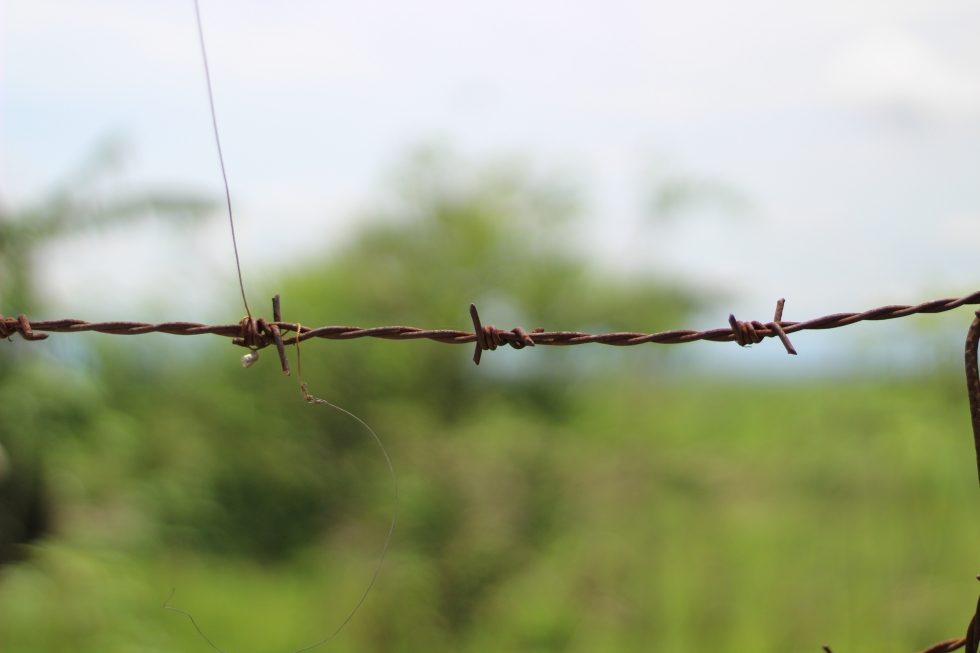 08 barbed wire